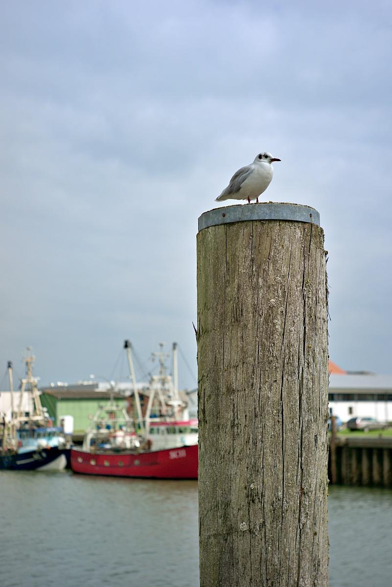 Im Büsumer Hafen (4)