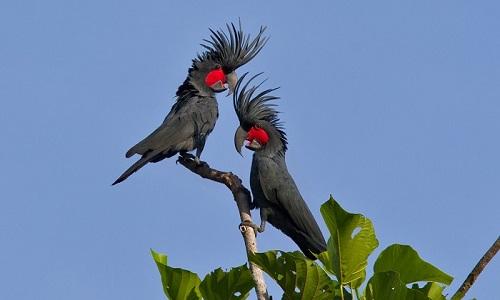 Hiç Görmediğin İlginç Egzotik Kuş Türleri