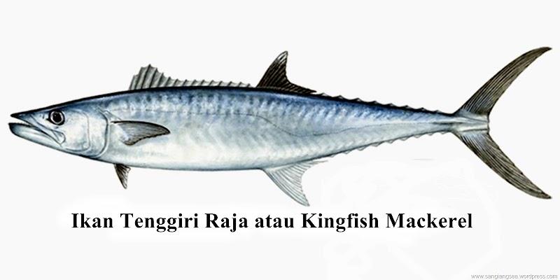 Kulit sensitif? Elak makan ikan jenis mackerel