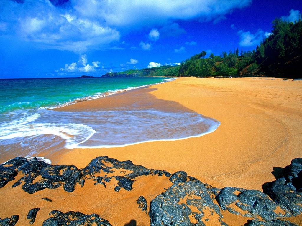 Good House Plant Beautiful Kauai Beach Of Hawaii Trip Area