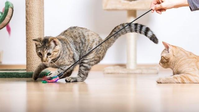 Αυτά είναι τα παιχνίδια που είναι επικίνδυνα για τη γάτα σας