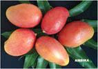 Mango Ambika- Aam