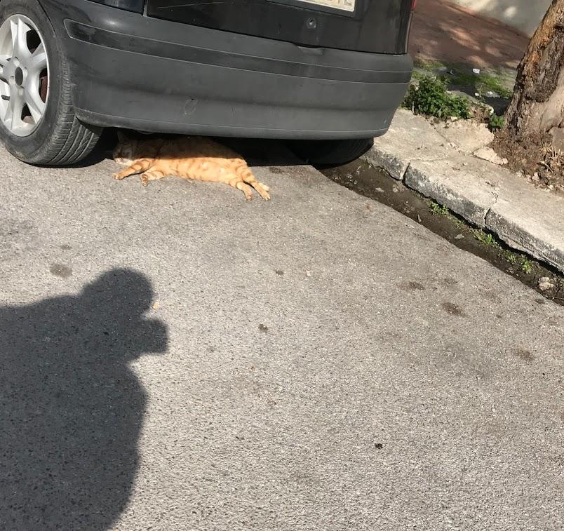 Στη Χαλκίδα προτίμησε να κάνει ηλιοθεραπεία σε ένα περίεργο μέρος