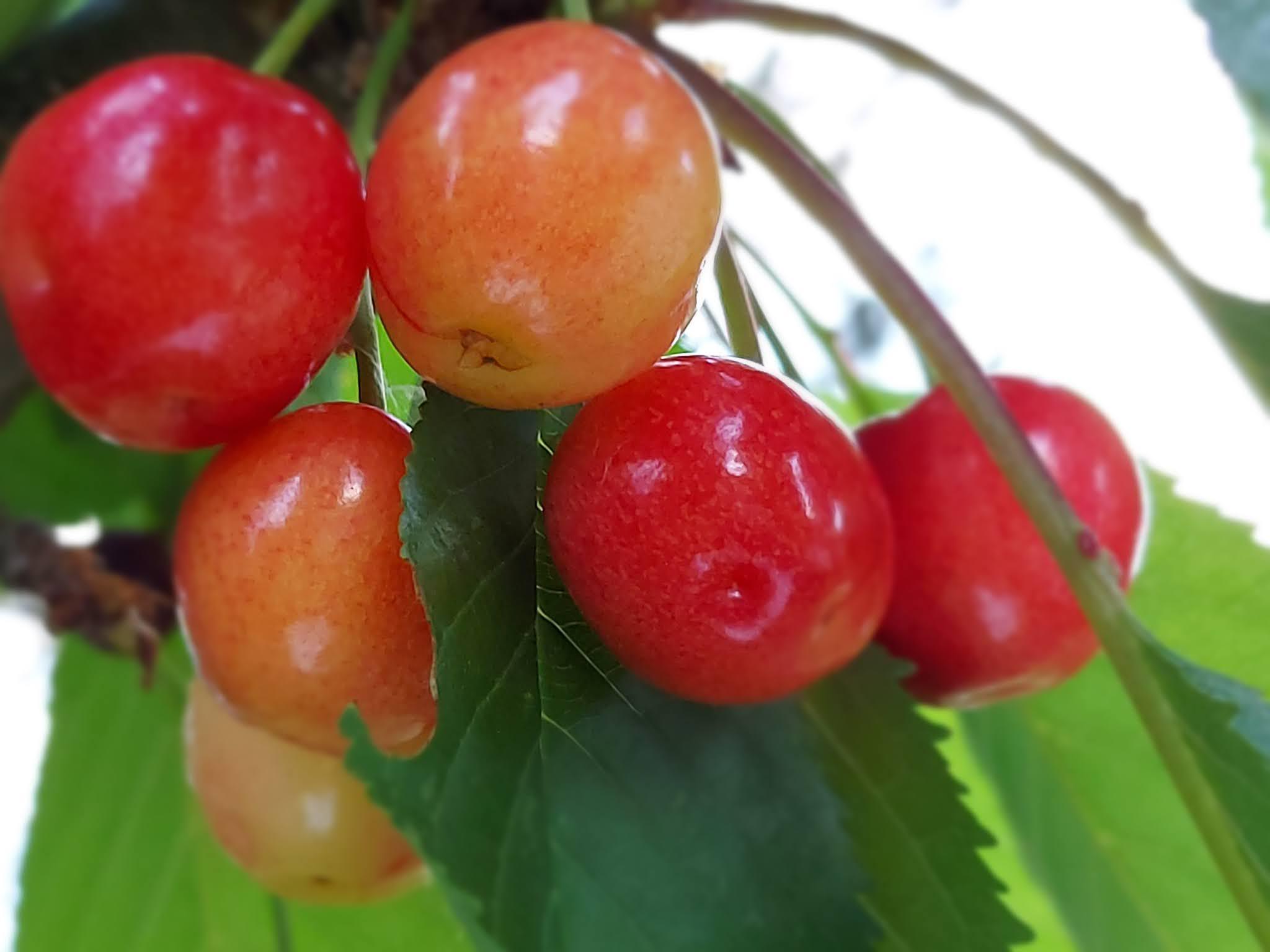 Cherries 🍒
