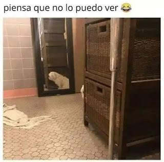 Perro escondido detrás de un mueble
