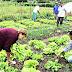 Câmara aprova auxílio com cinco parcelas de R$ 600 a agricultores familiares