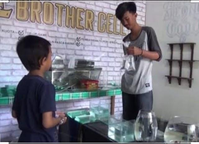 Pelajar Kreatif, Hasil Jualan Ikan Cupang Digunakan Untuk Membeli Kuota Untuk Belajar