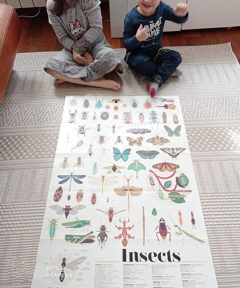 sticker poppik  les insectes