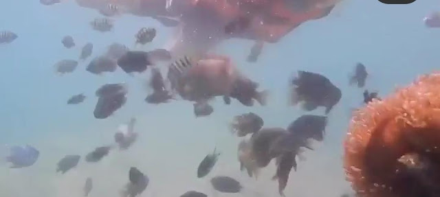Snorkling Pulau Labun Barelang Batam