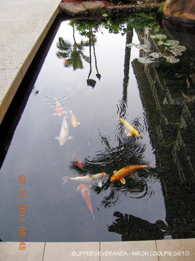Koi Pond - Westin Ka'anapali Ocean Resort Villas