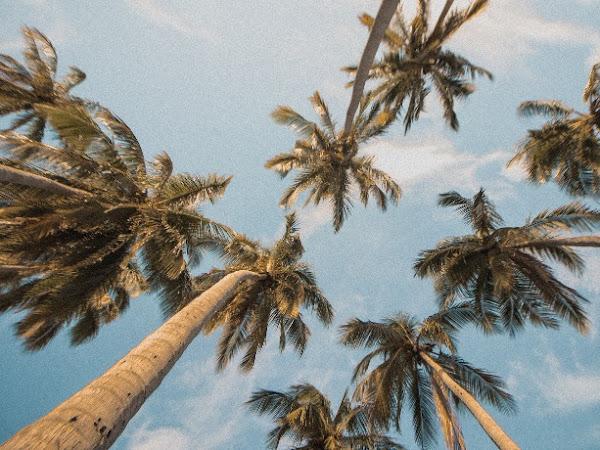 Planes para las vacaciones de un verano atípico