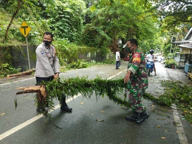 Meski Sempat Halangi Pengguna Jalan, Pohon Tumbang di Gunung Malang Sudah Selesai Dibersihkan Petugas Gabungan