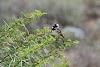 गौरैया: एक विलुप्तप्राय पक्षी और प्रकृति