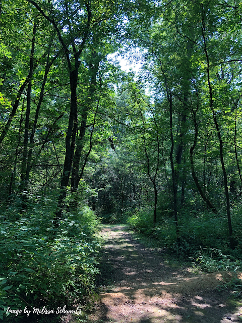 Meandering rolling trails at Castle Rock State Park.