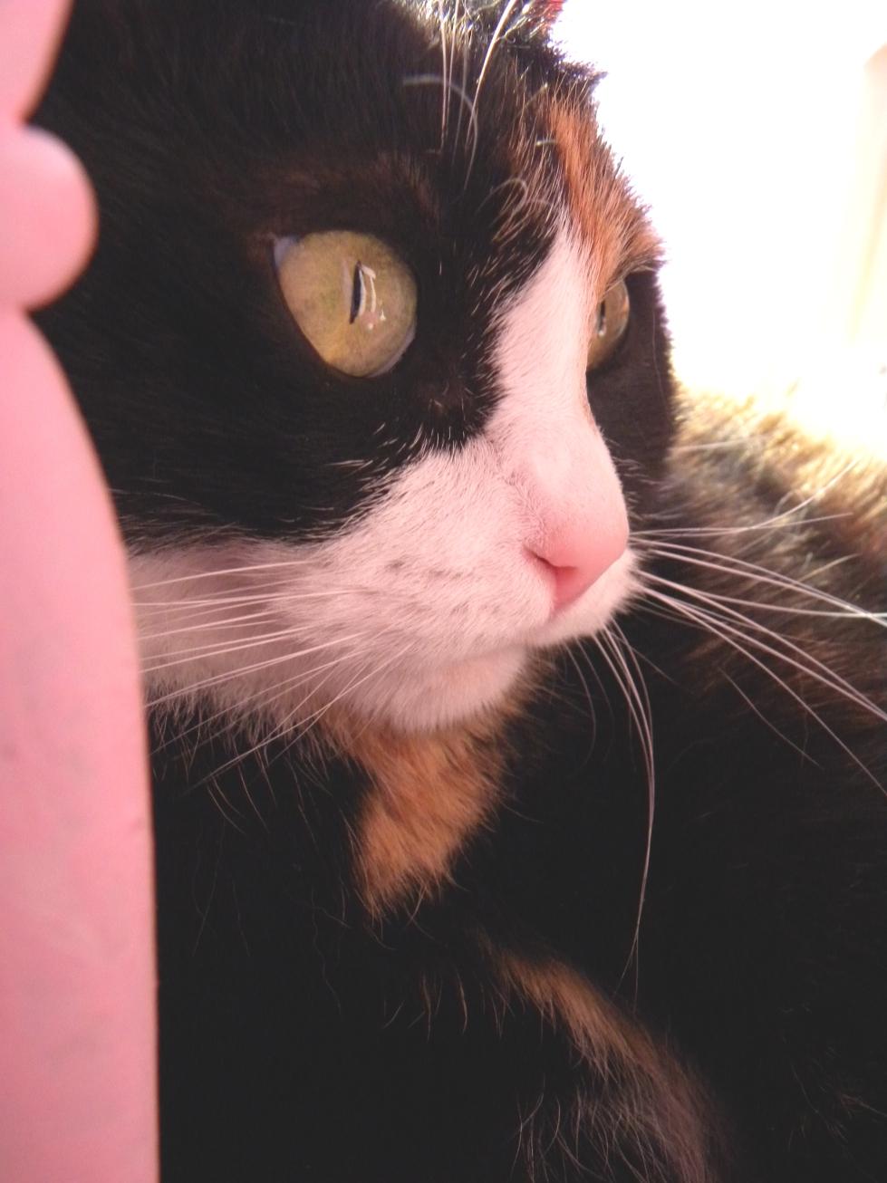 Cuccia Gatto Fai Da Te giogiocraft: diy cat bed/ cuccia gatto faidate.