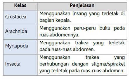 Sistem Pernapasan Arthropoda