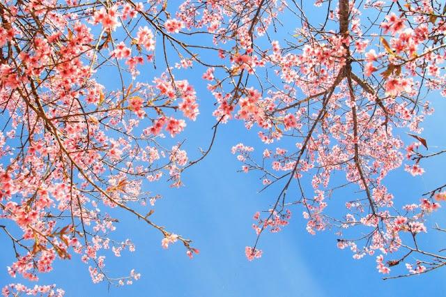 Chiêm ngưỡng vẻ đẹp tuyệt trần của vùng ngoại ô Đà Lạt 21