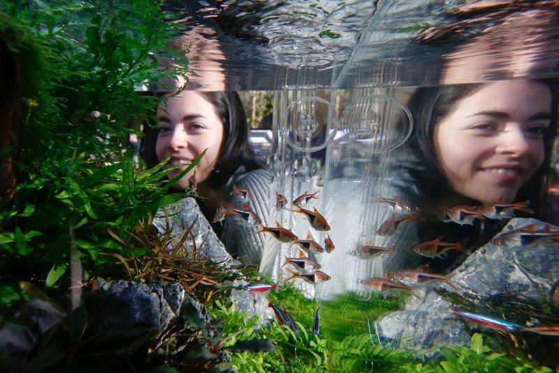 aquascaping o paisaje acuático