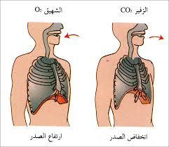 الهواء ضروري لحياة الإنسان والحيوان و النبات