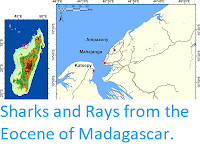 https://sciencythoughts.blogspot.com/2019/08/sharks-and-rays-from-eocene-of.html