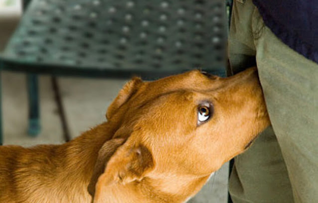 Why Do Dogs Sniff Crotch? Reasons Why Dogs Do It
