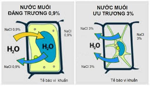 So sánh hoạt động của nước muối ưu trương và nước muối đẳng trương