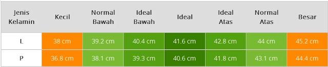 Tabel Ukuran Lingkar Kepala Bayi Usia Empat Bulan