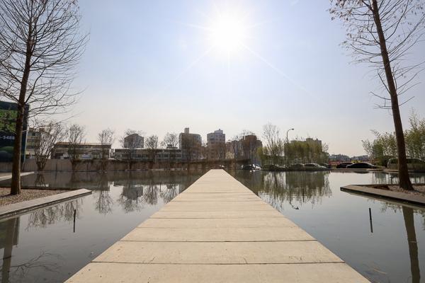 台中西屯國聚建設基地綠美化,落羽松森林、水池倒影,中央公園旁