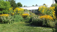 From the entrance, Marsh Botanical Garden - Yale University, New Haven, CT