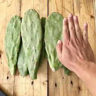 kaktus-centong-pakan-kura.jpg