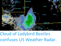 https://sciencythoughts.blogspot.com/2019/06/cloud-of-ladybird-beetles-confuese-us.html