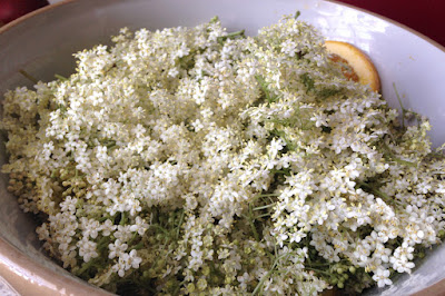 Large bowl filled with elderflower heads and citrus fruit