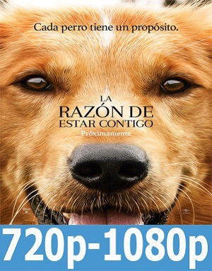 La razón de estar contigo (2017) HD 720p, 1080p Dual Latino-Inglés