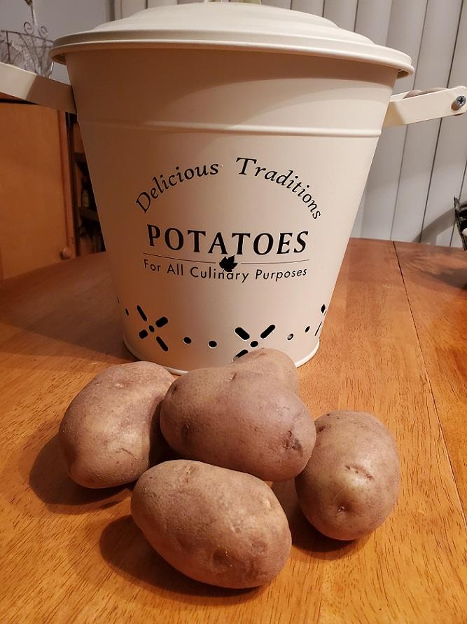 russet raw potatoes in a bin