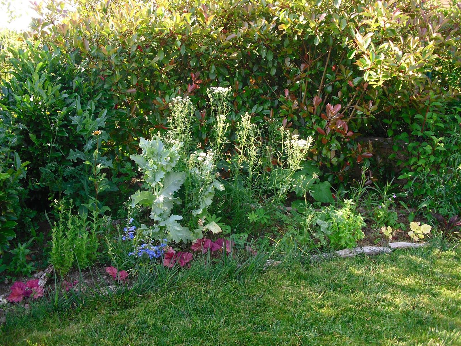 Mon petit jardin en Sologne: Le massif Arc en Ciel avant la canicule