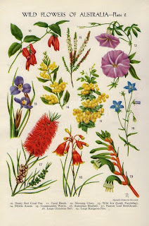 wildflowers of australia