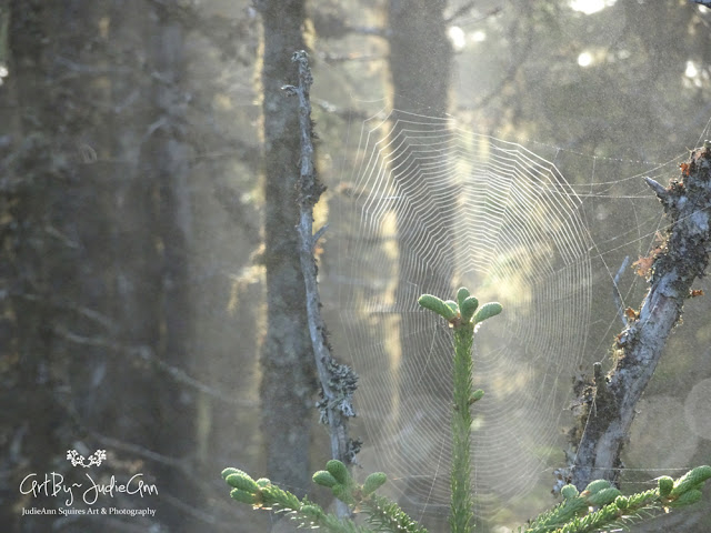 Fog In The Forest (Ravens & Webs) 10 Photos + Video