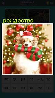 на фоне елки в рождество собака в зубах которой подарок 667 слов 5 уровень
