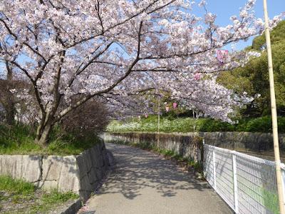 寝屋川公園 トリムコースの桜
