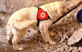 exercício para cães de trabalho