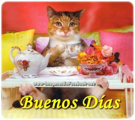gatito desayunando Buenos Días