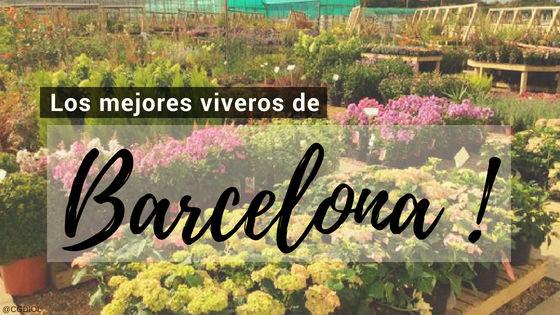 Comprar plantas online en Barcelona