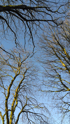 Blue skies and tree branches