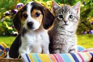 Hayvan sevgisi ile ilgili yazılar