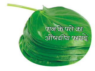पान के पत्ते का औषधीय फायदे  (Medicinal benefits of betel leaf)