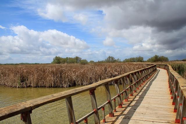 Isla del Maturro - Tablas de Daimiel