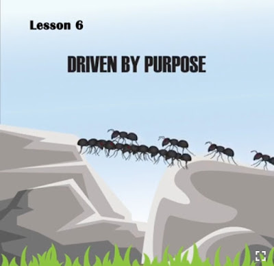 6 Lessons you can learn from an Ant