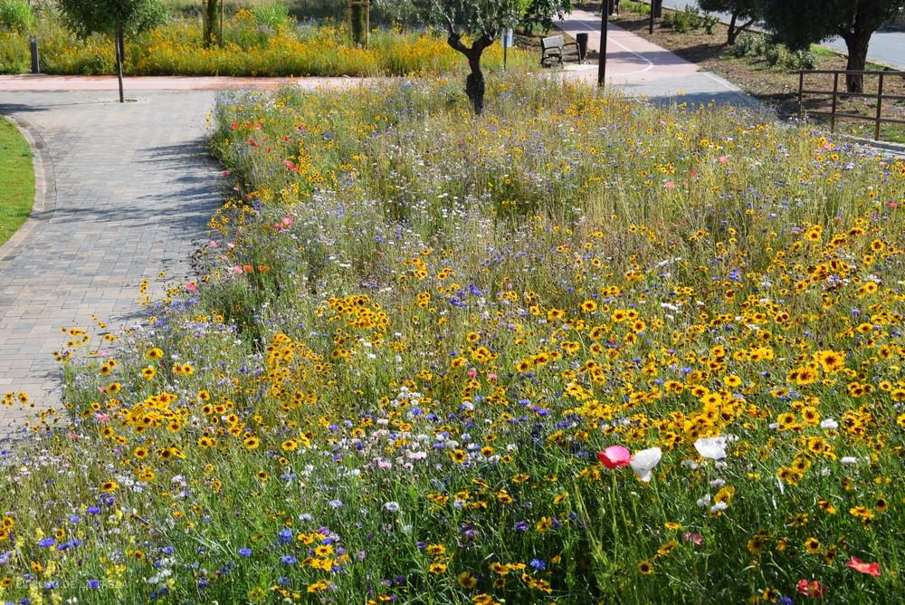 Praderas de flores anuales, bienales y perennes de diferentes colores