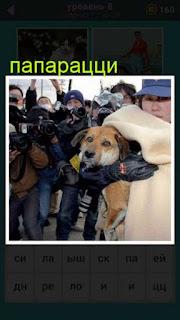на улице папарацци окружили женщину с собакой 667 слов 8 уровень
