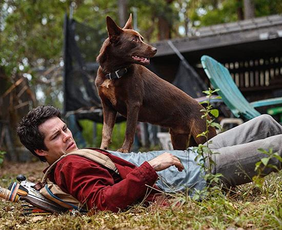 Joel e o cãozinho Garoto